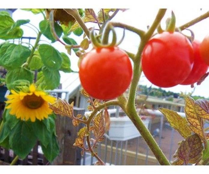 Verduras BIO: Productos de Biorganic Ibiza