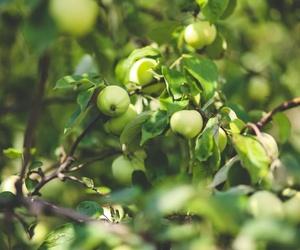 Árboles frutales en Monforte de Lemos