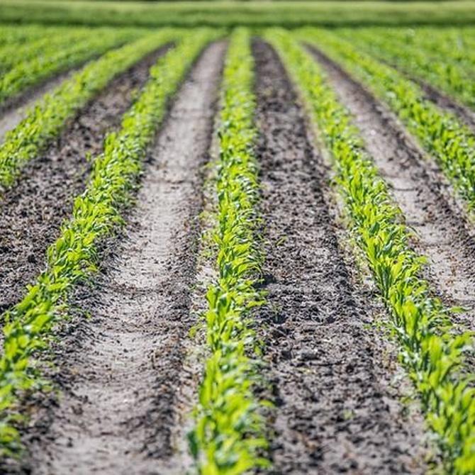 Papel del agua en la preparación del suelo de cultivo