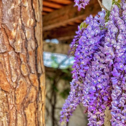 Mantenimiento de jardines en la Costa Brava | Món Verd