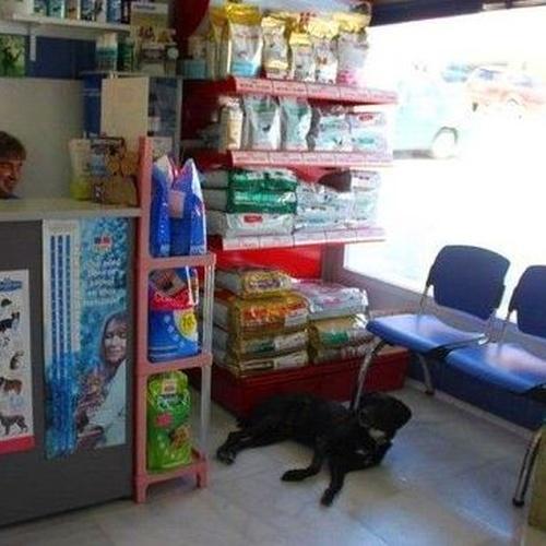 Clínica veterinaria y tienda en Pueblo Nuevo de Guadiaro, San Roque