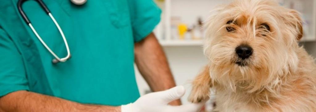 clinica veterinaria en Súria Barcelona