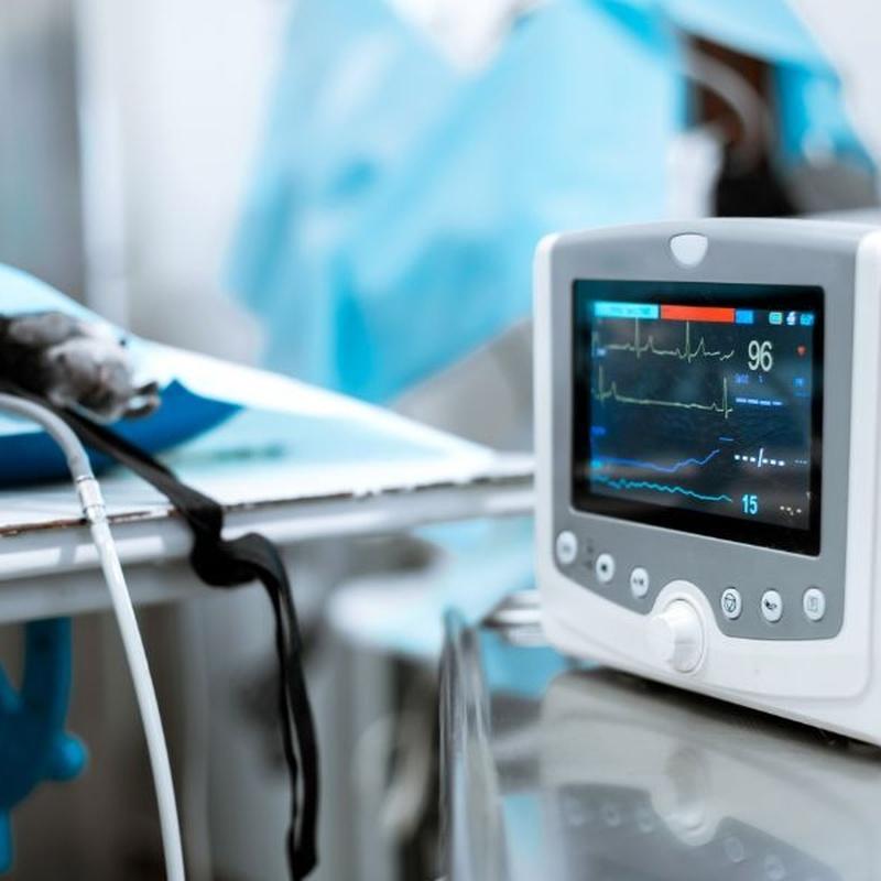 Cirugía y hospitalización: Servicios especializados de Centro Veterinario Vetersalud Carabanchel Alto