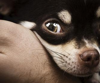 Identificación animal: Servicios de Clínica Veterinaria La Adrada