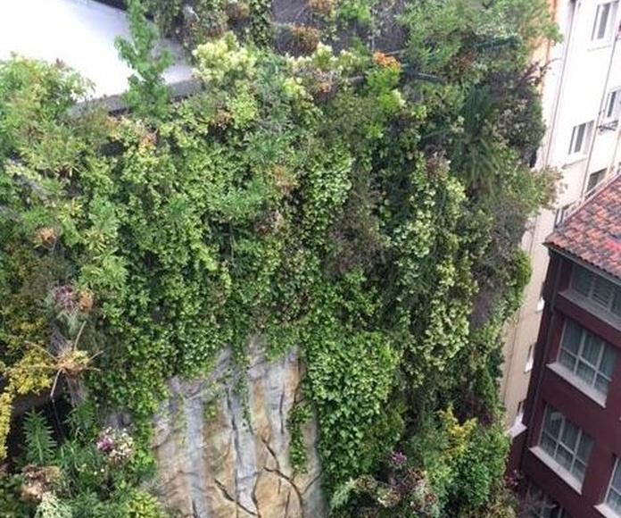 Asistencia a taller de mantenimiento de jardines verticales