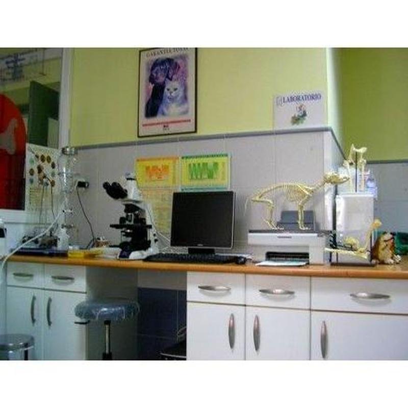 Cirugía: Servicios de Clínica Veterinaria San Antonio