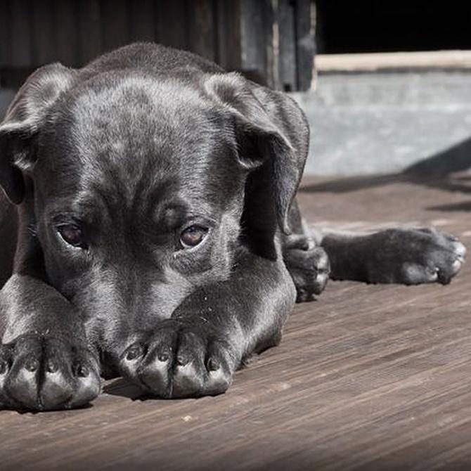 Trucos para que tu perro supere el verano sin sufrir el calor