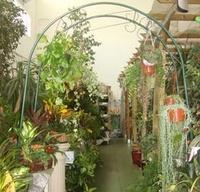 Complementos: Catálogo de Garden Rivas Flores y Plantas