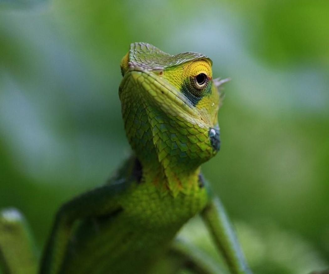 La importancia de acudir a un especialista si tu reptil sufre un prolapso