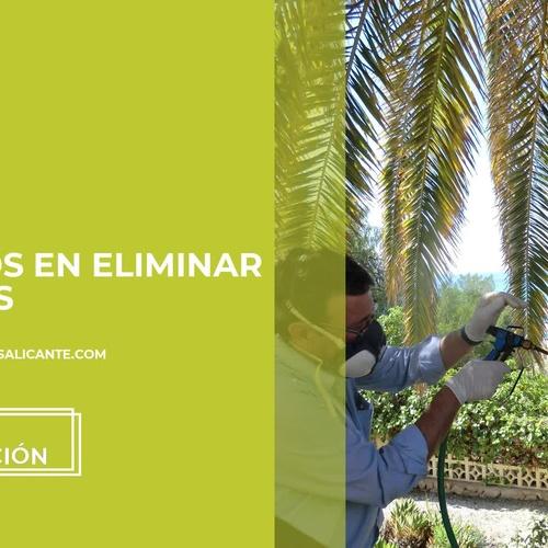 Empresas de desinfección en Alicante