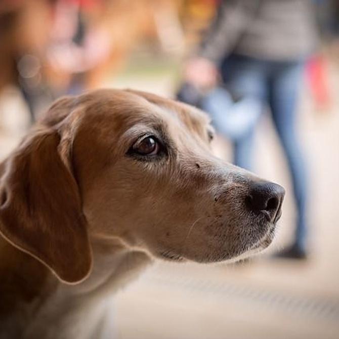 Las guarderías para perros