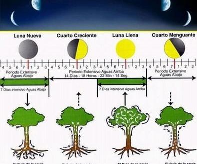 Las fases lunares y nuestras plantas
