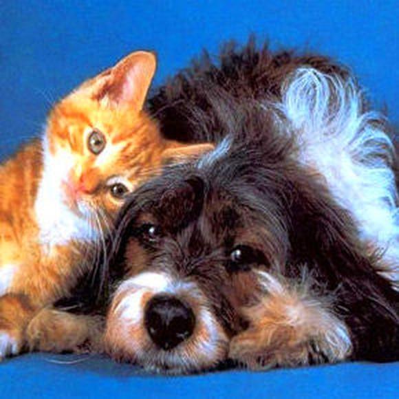 La elección de tu mascota. Adopción.