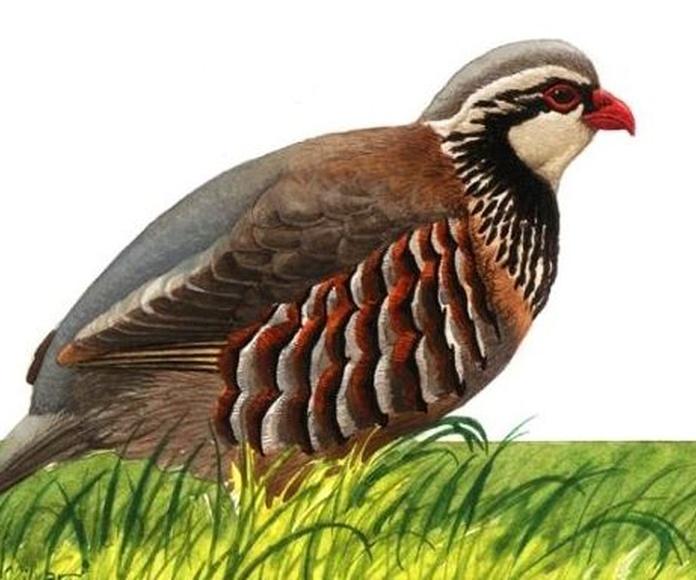 ilustración naturaleza 1