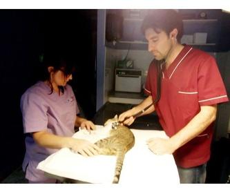 Análisis: Servicios de Clínica Veterinaria Vilavet
