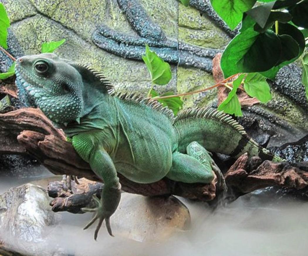 Métodos de identificación de animales exóticos
