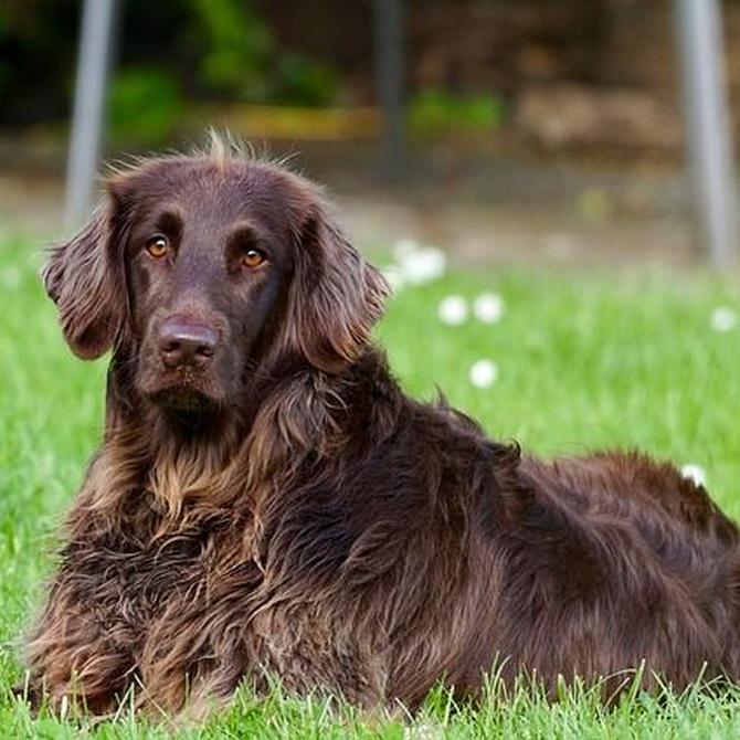 Cómo saber si una peluquería canina es de confianza