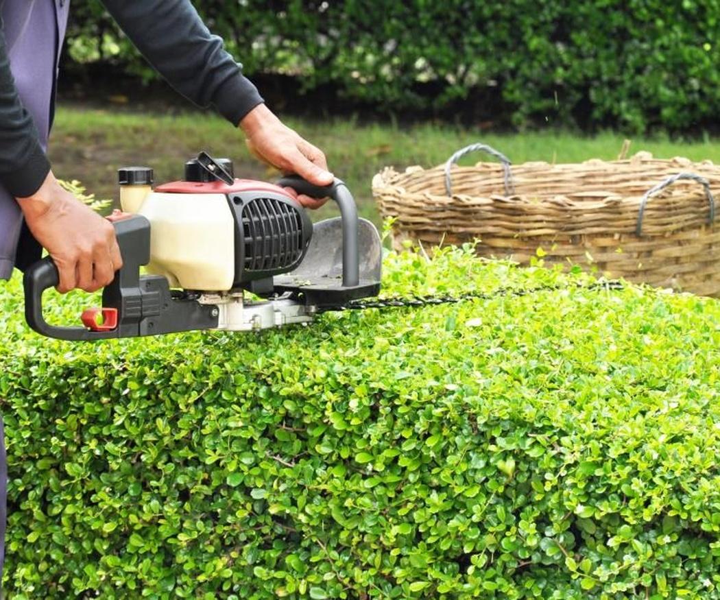 Se acerca la primavera y hay que preparar el jardín (II)
