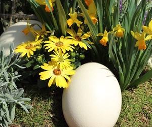 Venta de huevos de avestruz