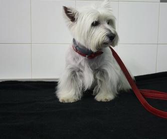 Accesorios y complementos: Servicios de Dog Show - Alella