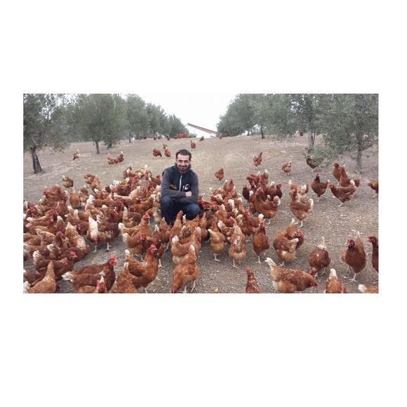 Huevos camperos de gallina