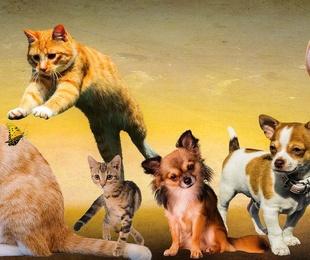 Razones para acudir a las urgencias veterinarias
