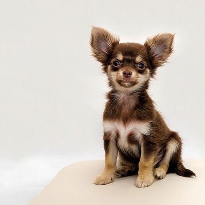Los beneficios de la peluquería para tus mascotas