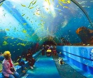 Venta de entradas del acuario de Gijón