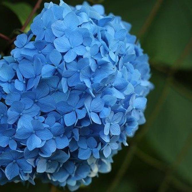 Decorar nuestro hogar con flores de invierno
