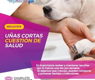 Las uñas cortas en los perros es cuestión de salud