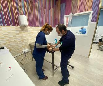 Oftalmología: Servicios de Clínicas Veterinarias Vetsur