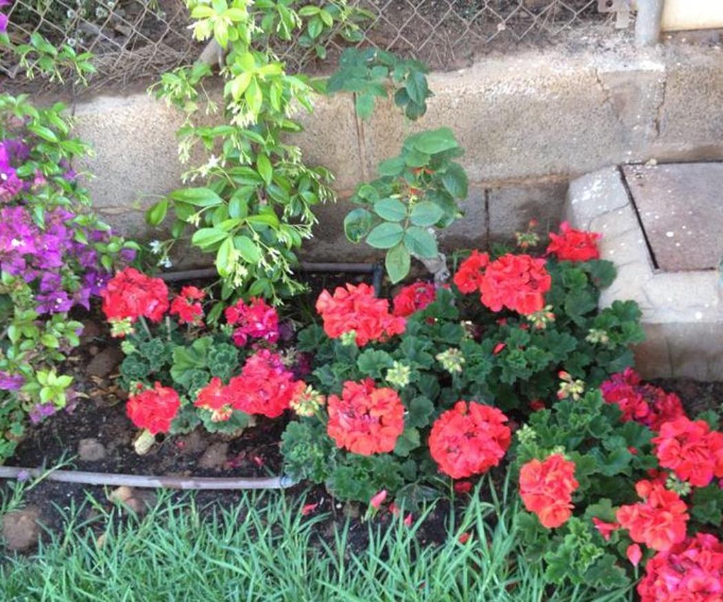 Flores para tu jardín