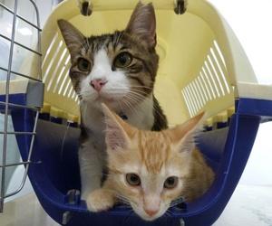 Vacunas para gatos en Alcorcón