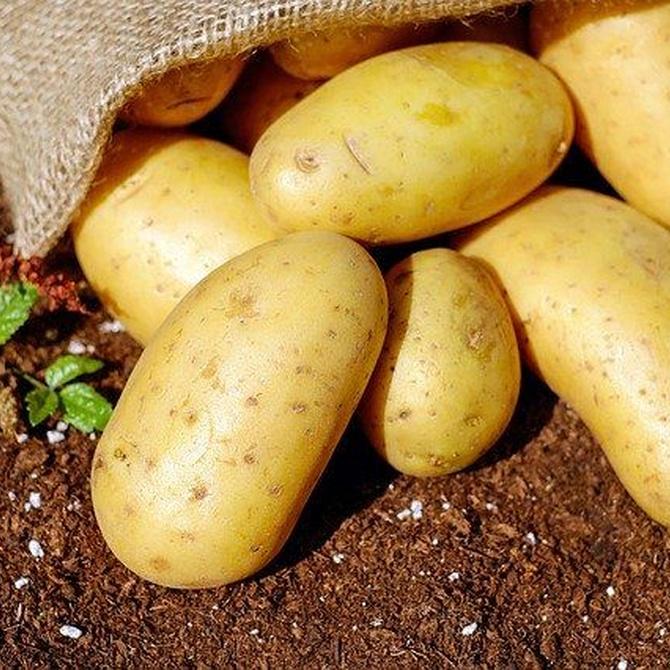 Descubre el origen y la historia de las patatas bravas