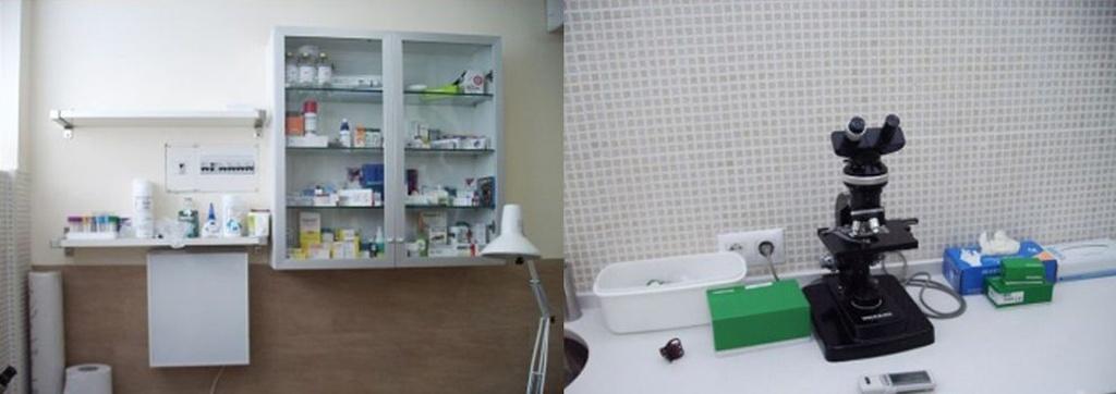 Vacunación de perros en Las Rozas  | Centro Veterinario La Tortuga