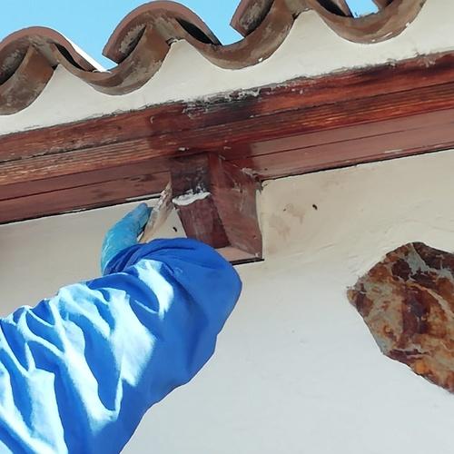 Tratamiento de termitas en Tenerife