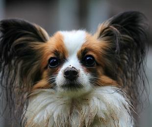 Una peluquería canina supone mucho más que estética para tu perro