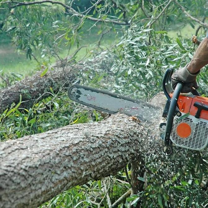 Tala de madera, desbroce y cortafuegos
