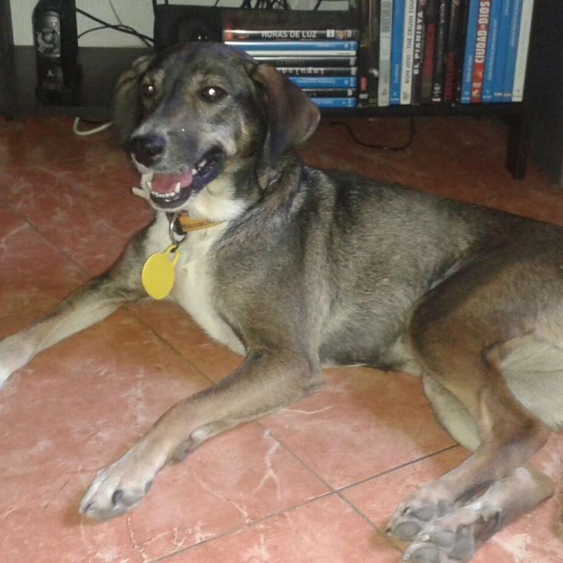 Epilepsia Canina.:  de Clínica Veterinaria Rocafort