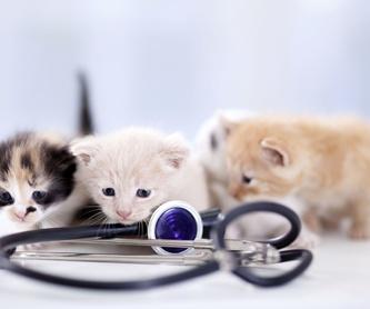 Alimentos para animales: Servicios  de Clínica Veterinaria Las Palmeras