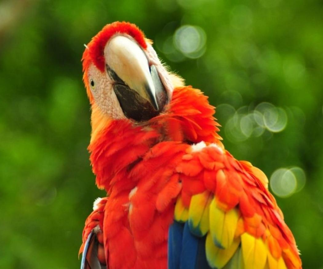 Aves exóticas más frecuentes en el hogar (I)