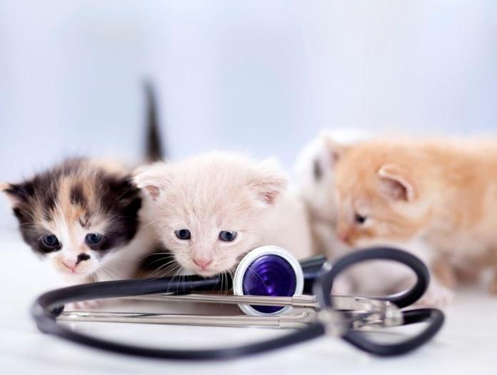 Cardiología: Servicios de Clínica Veterinaria Parque Aluche