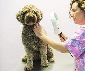 Alergias en perros en Santa Cruz de Tenerife