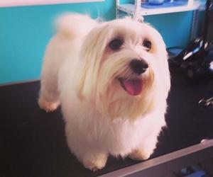 Peluquería canina y para otras mascotas