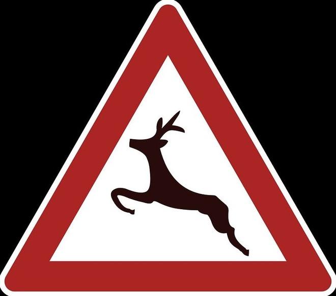 Los jabalíes provocan el 33% de los accidentes de tráfico con animales