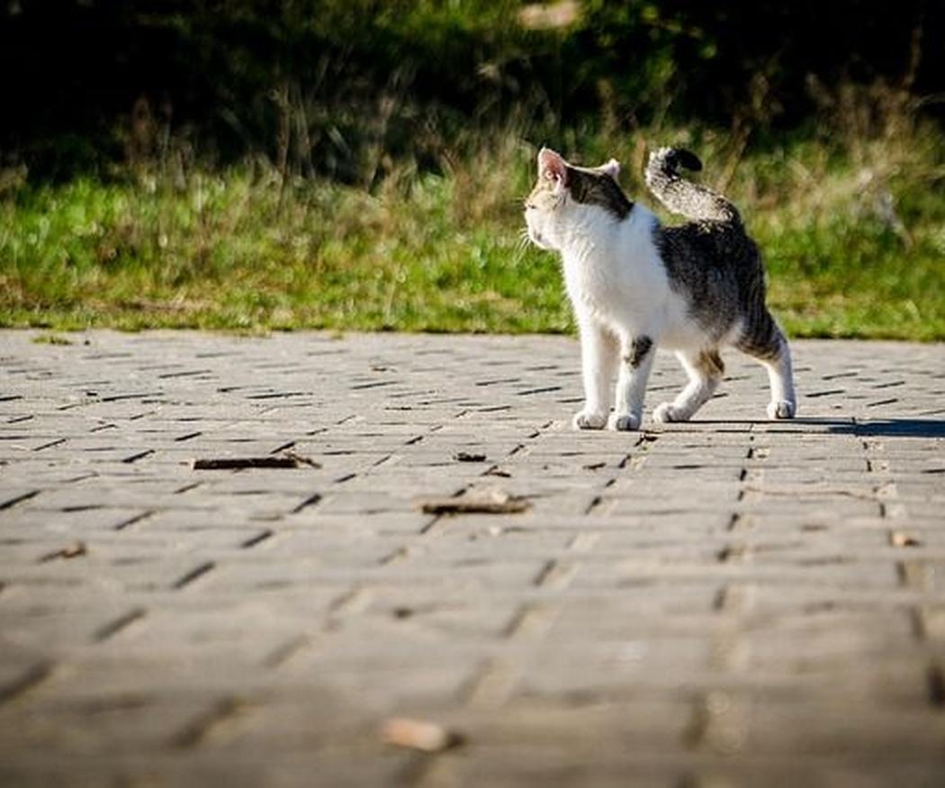 Cómo prevenir las enfermedades renales en gatos