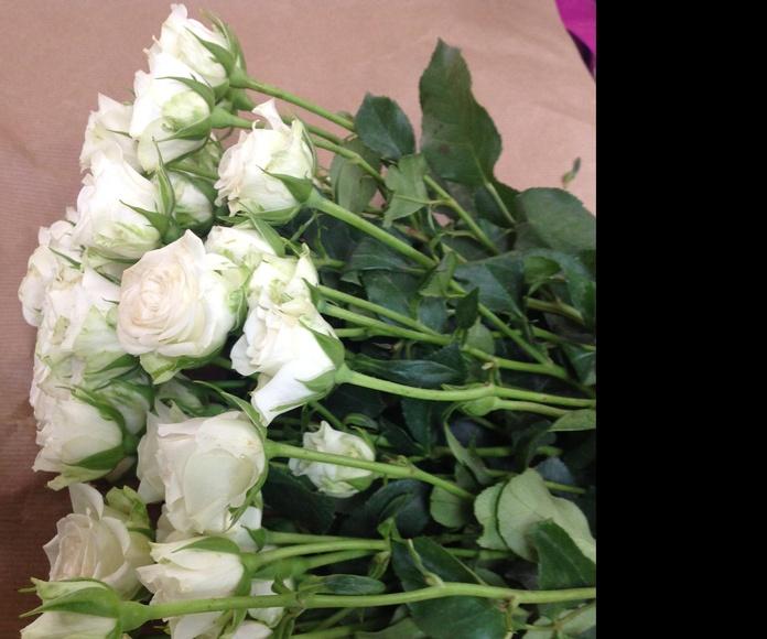 Rosas ramificadas. Recién llegadas!!