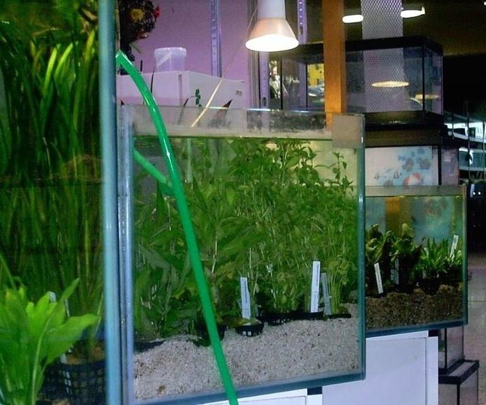 Aquariofilia: Productos de Aquarama