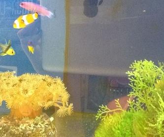 Grava acuarios: Animales y Accesorios de Mila-Bierzoo