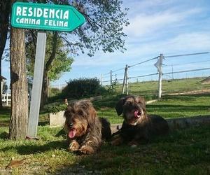 """RESIDENCIA CANINA- FELINA """"La Cartilla"""" en las instalaciones del HOSPITAL VETERINARIO SIERRA DE MADRID"""